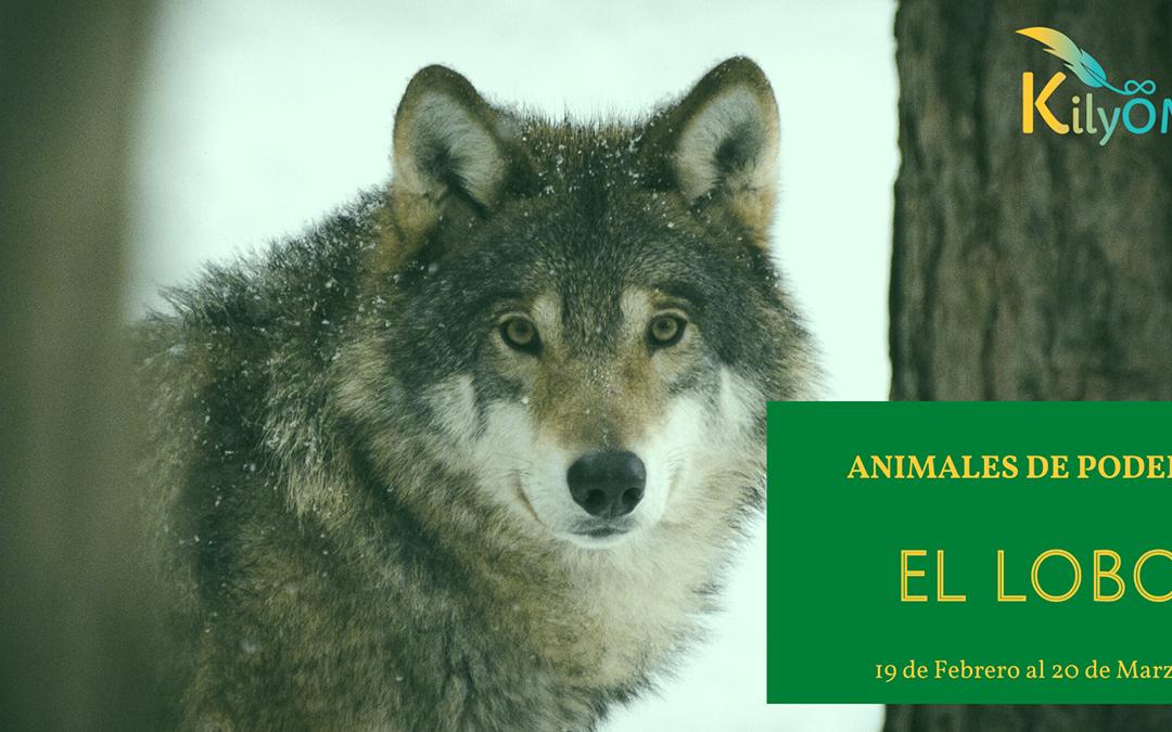 Animales de poder – El lobo